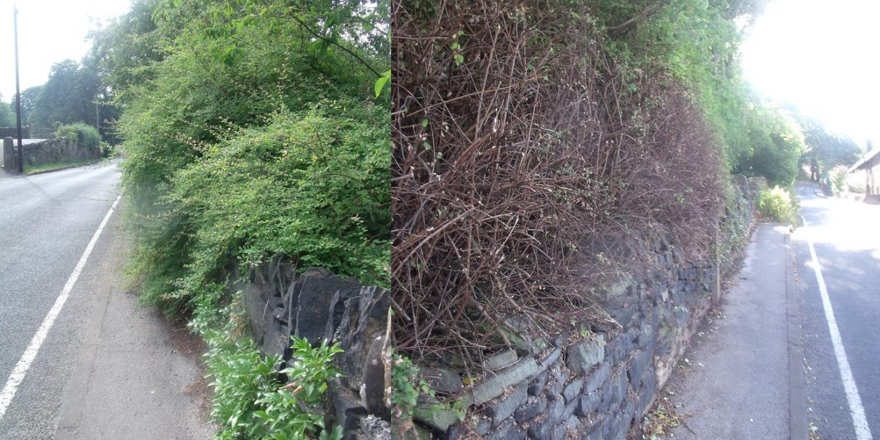 Laneside vegetation gets a much needed haircut!