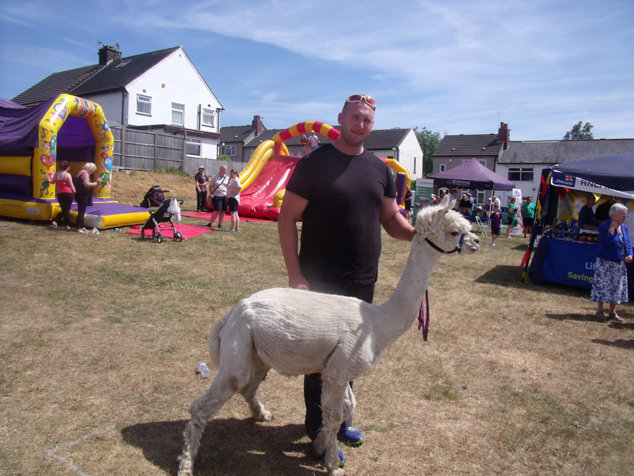 This llama is a long way from its home - not darkest Peru but Tong near Bradford!