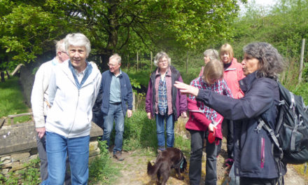 Kirkheaton Bio-Blitz Survey Walk