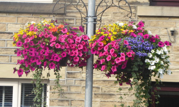 Are you enjoying the wonderful display of hanging baskets round the village?